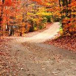 「○○の秋」皆さまは何の秋ですか?